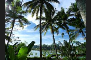 Temuku Villas Ubud - View from Hotel
