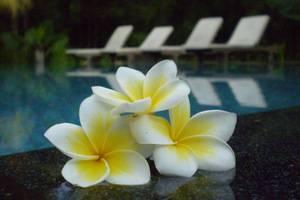 Puri Ulun Carik Bungalows Bali - Side Pool