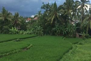 Uma Kutuh 2 Bali - Pemandangan