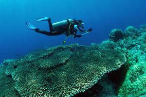 Murex Dive Resorts Manado