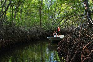 Pesona Mangrove Bungalow Lembongan - Bakau