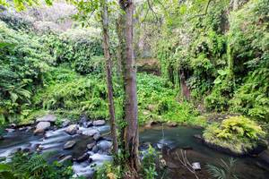 The Lokha Ubud - Sungai WOS