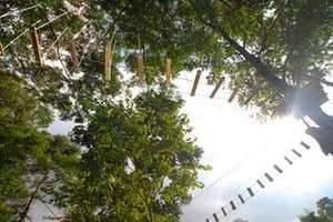 The Green Forest Resort Bandung - Outbond