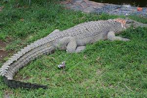 Rizen Kedaton Hotel Bogor - Animals