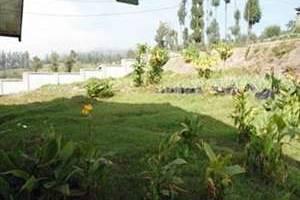 Hotel Ucik Tengger Probolinggo -