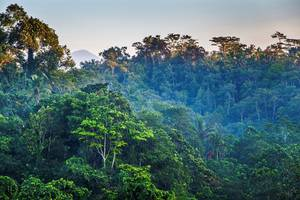 Ashoka Tree Resort at Tanggayuda Bali - Pemandangan alam di depan villa