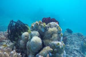 Green Coral Beach Camping Ground Tanjung Lesung Pandeglang - Menyelam