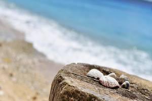 NusaBay Menjangan by WHM Bali - Pantai