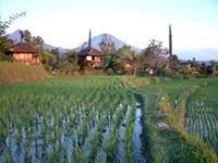 Puri Lumbung Cottages Bali - Cottage Standar Regular Plan